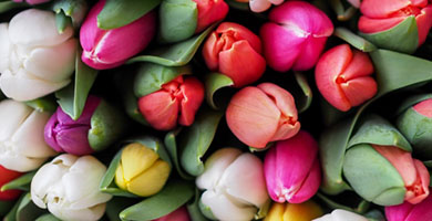 Unsere Benefits - Blumen
