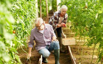Kann man das Altern durch die Ernährung aufhalten?