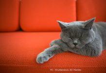 Kann man auf der Couch Gewicht verlieren
