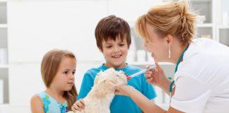 Behandlung einer Tierhaarallergie
