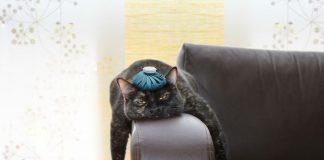Woher kommen Kopfschmerzen?